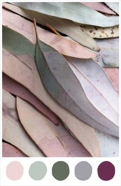 Beautiful autumnal eucalyptus leaves inspire our latest colour palette. Feathery dusty pastels offset with deeper darker hues, perfect for a late autumn wedding. Who said autumn always has to be red, orange and brown?Image via karina...