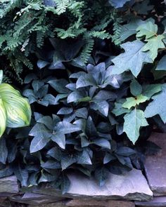 Green Light - Nature's go-with-everything color glows in maidenhair fern, oak-leaf hydrangea, hellebore, and hosta.