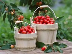 Cherries - fruit Wallpaper