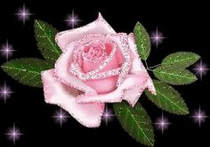 Glowing pink rose dark background | photo FlowerRosePinkGlitterSparkleBlack.gif