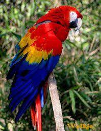 Afbeeldingsresultaat voor papegaai