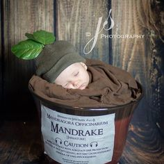 """""""This little Mandrake just wanted to sleep and totally crashed when we put him in the planter. I wish I would have captured his face when he woke up at the end of the session! #mandrake #harrypotter #babypotter #newborn #newbornphotography #seattle #seattlephotographer #rentonphotographer #redmondphotographer #ilovebabies #issaquahphotographer #jackiesteinkephotography #bothellphotographer #bellevuephotographer #dallas #dallasphotographer #newcastlephotographer"""" Photo taken by…"""