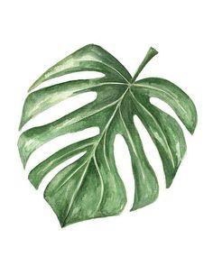 ORIGINAL Minimalist Cheese Plant Leaf Watercolor Painting
