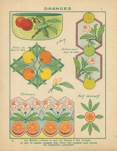 Illustration Botanique, Botanical Illustration, Illustration Art, Art Nouveau Pattern, Art Nouveau Design, Art Pictures, Photos, Art For Art Sake, Japanese Prints