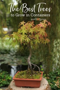 Growing trees in containers is actually a great way to cultivate many different varieties of tree. Simply make sure that you choose the right container and the right tree, and you're on your way to growing your very own mini forest.