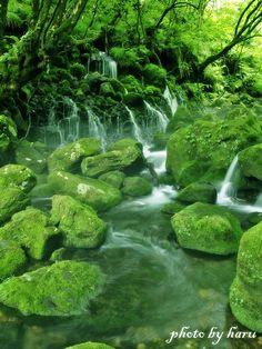 Moss can grow where moisture abounds