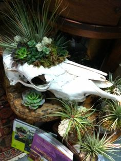 Skull with succulents ... I really want to do this. Where can you find skulls?