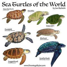 Le plus chaud Photos Reptiles activities Réflexions Save The Sea Turtles, Baby Sea Turtles, Sea Turtle Art, Turtle Love, Kinds Of Turtles, Sea Turtle Shell, Turtle Baby, Les Reptiles, Reptiles And Amphibians