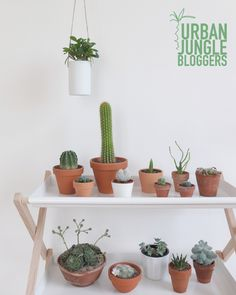 pinned by barefootstyling.com Urban Jungle Bloggers: My Plant Gang by @chatdomestique