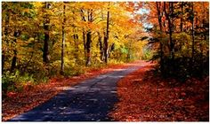 'An Ode to Autumn' - A Poem for the November Center Parcs Family Challenge
