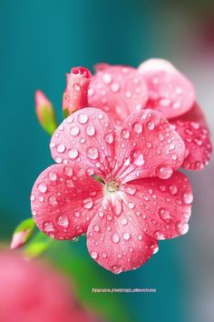 Great close up for painting water droplets on flowers.