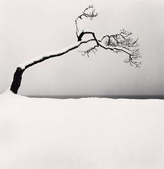 ARTIST:  Michael KennaTITLE:  Kussharo Lake Tree, Study 2, Kotan, Hokkaido, JapanDATE:  2005MEDIUM:  gelatin silver prinSIZE:  h: 7.5 x w: 7.5 inEDITION:  45
