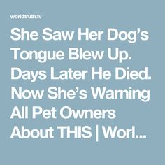 She Saw Her Dog's Tongue Blew Up. Days Later He Died. Now She's Warning All Pet Owners About THIS | World Truth.TV