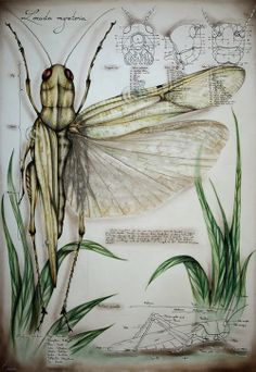 Insect entomology illustrations by Paula Duță from Romania Art Connection, Illustration Botanique, A Level Art, Nature Journal, Detailed Drawings, Wildlife Art, Science And Nature, Natural History, Painting & Drawing
