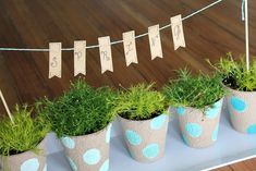 Bring Spring indoors with an easy to create and maintain Tabletop Garden!