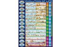 EuroGraphics 6000-0080 - Evolution of Life - 1000 db-os puzzle