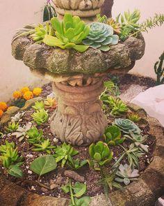 #fuente de #suculentas #sustainable #siempreviva #succulent #foutain #imepp_ac http://ift.tt/1JDQqg3