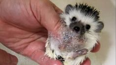 8 adorable videos of baby animals taking baths #pets #animals #cute