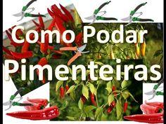 http://w500.blogspot.com.br/?m=1