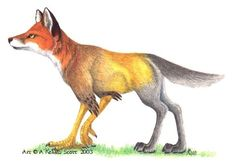 A mythological creature called an Enfield - I do think the idea of this creature might make for a good tattoo for me!