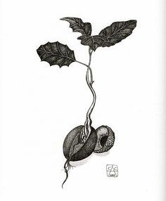 "C. P. Adorio. Sprouting Acorn. Permanent pigment ink on 9""x12"" Bristol board."
