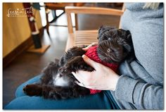 Atlanta Dog Photography & Pet Portraits by Leesia Teh » dog photographer, cat photographer & pet photographer specializing in on-location pe...