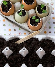 Repurpose egg shells into seed pots with the help of this Easter DIY project. Easter Candy, Easter Eggs, Easter Egg Designs, Fun Games For Kids, Easter Crafts For Kids, Easter Activities, Kid Crafts, Easter Brunch, Easy Diy Crafts