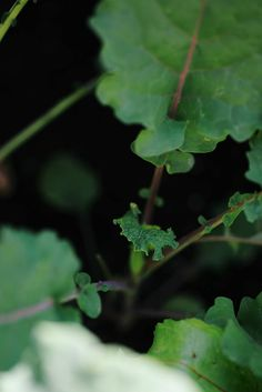 Kale | A Brown Table