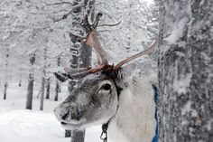 Eine Reise nach Lappland: The Iglu Has Landed (Text: Olaf Tarmas; Fotos: Axel Martens)