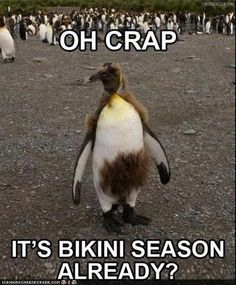 Oh crap...it's bikini season already?!