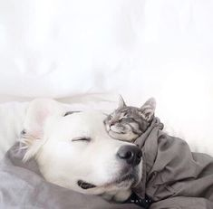 Cute cats and kittens, i love cats, raining cats and dogs, missing you so m Animals And Pets, Baby Animals, Funny Animals, Cute Animals, Tier Fotos, Golden Retrievers, Dog Friends, Cat Love, Animals Beautiful