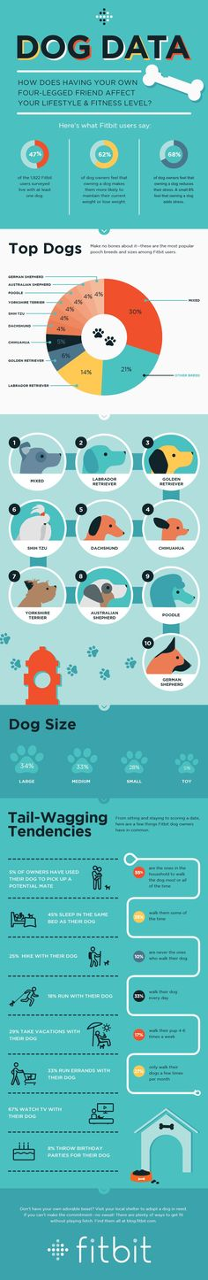 How having a dog affects your lifestyle and fitness level.