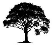 Silhouette Of Oak Tree - Download From Over 50 Million High Quality Stock Photos, Images, Vectors. Sign up for FREE today. Image: 44662890