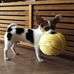 ¡Al ladrón, al ladrón! Nuestras mascotas siempre están alerta para robarnos el ovillo que necesitamos, jeje