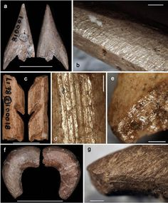 35,000 year old Paleolithic bone tools found from South China