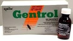 Gentrol Concentrate IGR Insect Growth Regulator 10x1oz ZOE1006B by gentrol. $58.58. * Concentrate travels deep into wall cavities, cracks and crevices * Reaches pests that other treatments neglect. * Can be used in: apartment buildings, bakeries, bottling facilities, laboratories, cereal processing facilities, manufacturing plants, mausoleums, meat and produce canneries, nursing homes, restaurants, schools, locker rooms, stores, taverns, warehouses, pet stores, as well as various...
