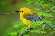 Beautiful Birds, Hanging Out, Things To Think About, My Photos, Twitter, Animals, Animales, Animaux, Animal Memes
