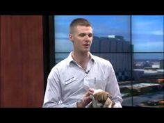 Top 10 Poison Prevention Tips For Dogs - Dogtime
