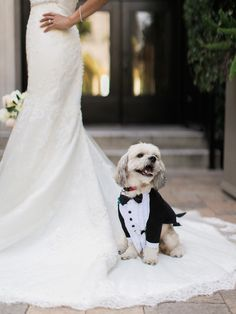 Wedding pets dogs puppies ideas with bow ties and mini suits 2019 Spring romantic elegant wedding dress photo ideas Dog Wedding Outfits, Dog Wedding Dress, Tuxedo Wedding, Mod Wedding, Dream Wedding, Wedding Dresses, Wedding Dogs, Dog Outfits, Elegant Wedding