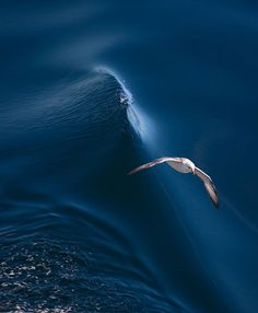 Above the wave by Vyacheslav :)