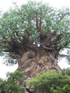 One Day in Animal Kingdom Park | Tips from the Disney Divas and Devos