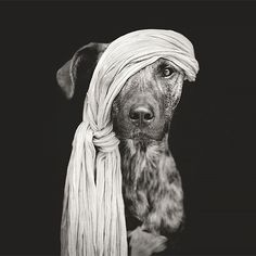 Expressive Dog Portraits by Elke Vogelsang | Inspiration Grid | Design Inspiration