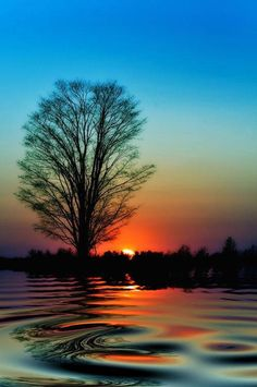originally from tumblr I love the ripples on the water, the tree, and the sky