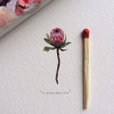 Day 248 : Pink Ice Protea | Protea Neriifolia x Susannae - the hardiest of all proteas. 14 x 30 mm. #365postcardsforants #wdc624 #miniature #watercolor #protea #pinkiceprotea #flower #capetown #lovecapetown