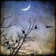 birds crows moon sky flight evening trees winter by SherriConley, $30.00