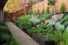 B Willow Spring - contemporary - landscape - san francisco - by Huettl Landscape Architecture