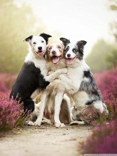 20 Portraits attachants de chiens en milieu rural