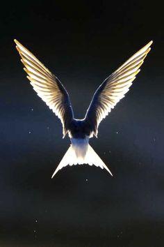 'Like an angel' - by Jari Heikkinen