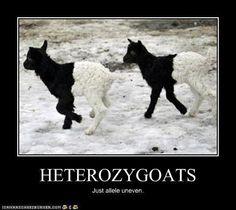 Biology humor...