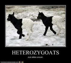 Ha! Science nerd jokes...they just never get old.